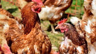 Ученые советуют слушать звуки животных