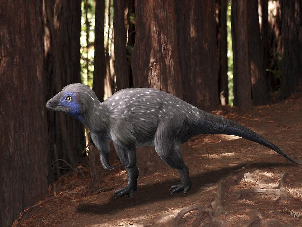 Ученые: перья появились за 100 миллионов лет до птиц