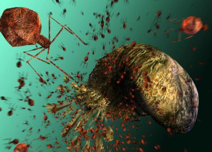 Что такое бактериофаг?