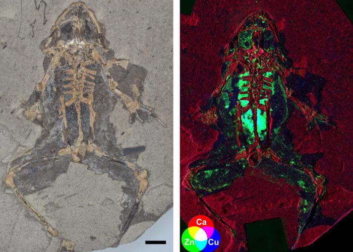Ученые открывают новый способ реконструкции того, как выглядели вымершие животные