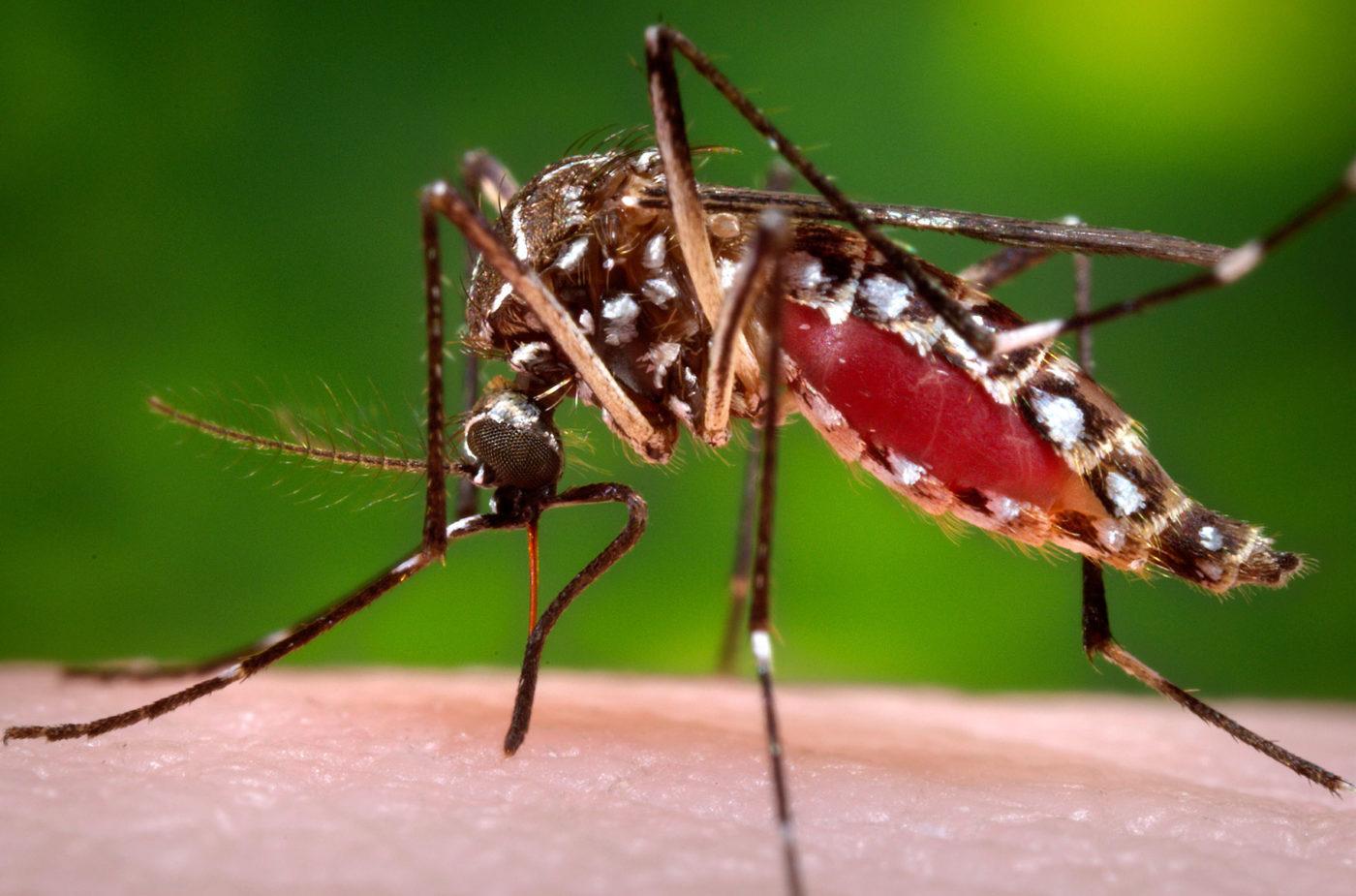 10 разных видов комаров - И болезни, которые они несут