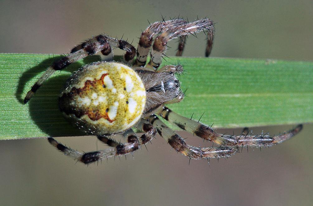 Наблюдения за полетами пауков могут привести к транспортным инновациям