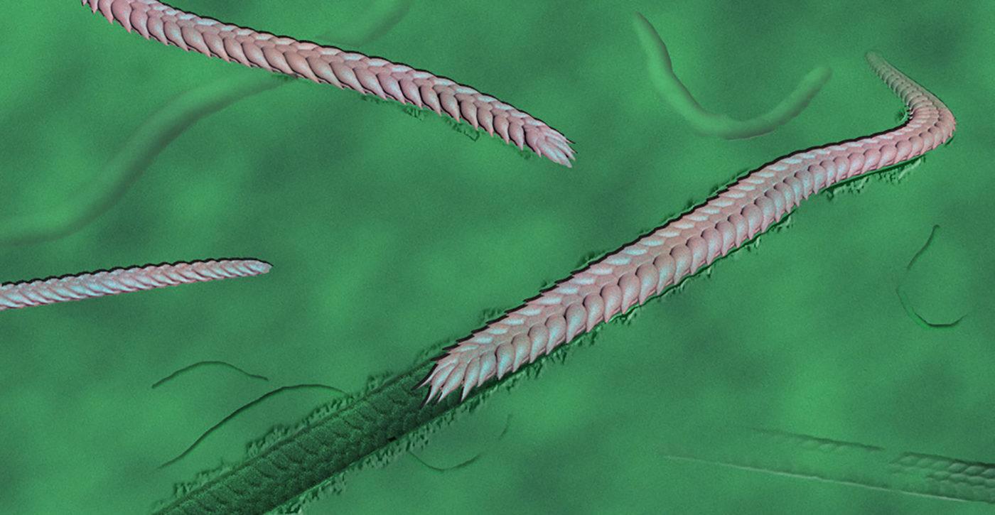 Это одна из самых ранних известных троп, оставленных животным на Земле
