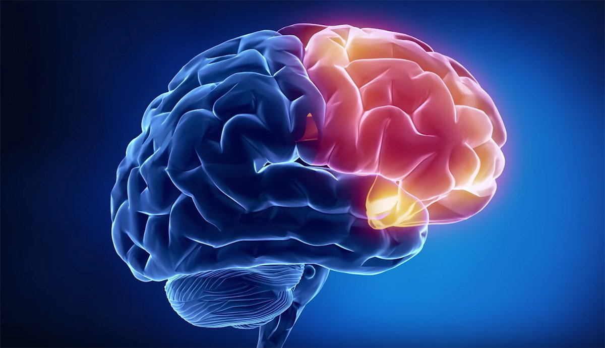 схематическое изображение головного мозга человка