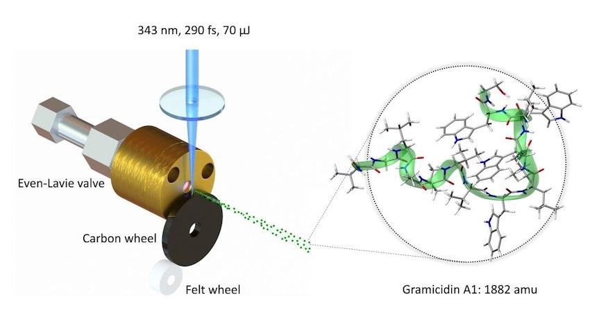 Физики наблюдают, как первая естественная биомолекула ведет себя как квантовая волна