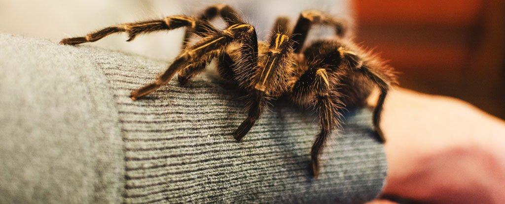 Мы действительно рождены с естественным страхом перед пауками и змеями