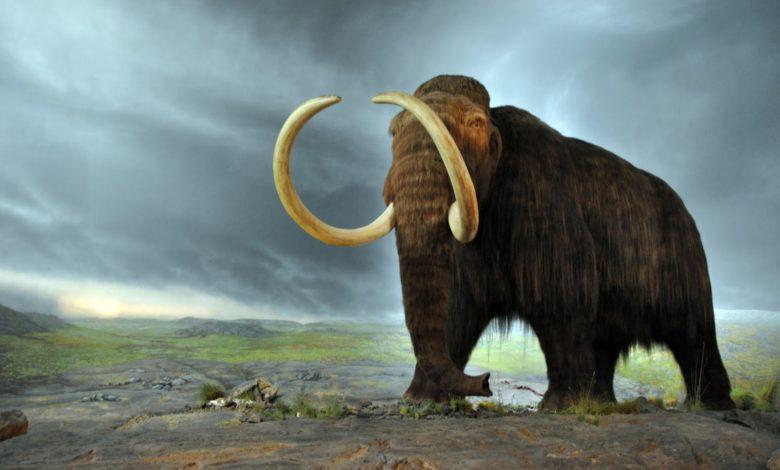 Сколько лет могут жить неандертальцы или шерстистый мамонт?
