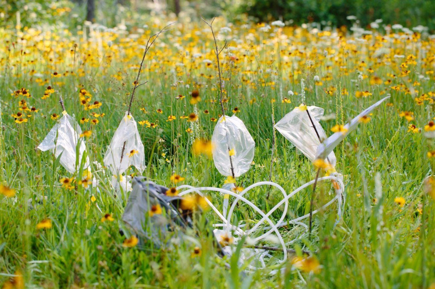 Орхидеи могут стать будущим репеллентами от комаров
