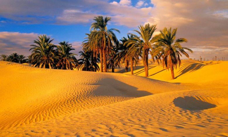 Пальмы были выращены из 2000-летних семян