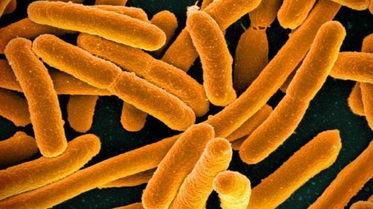 Некоторые бактерии могут жертвовать собой, чтобы спасти свои колонии