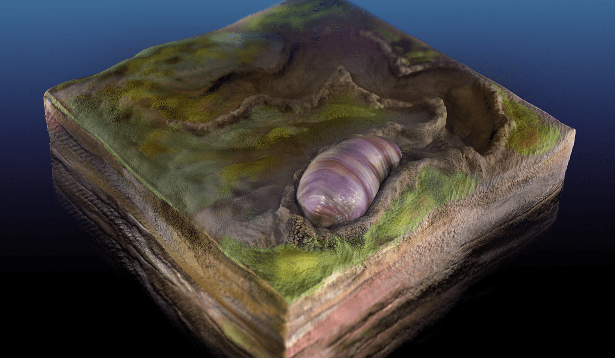 Самый старый предок почти всех животных найден в австралийских окаменелостях