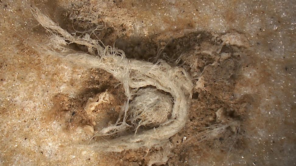 Неандертальцы овладели искусством ткачества задолго до современного человека