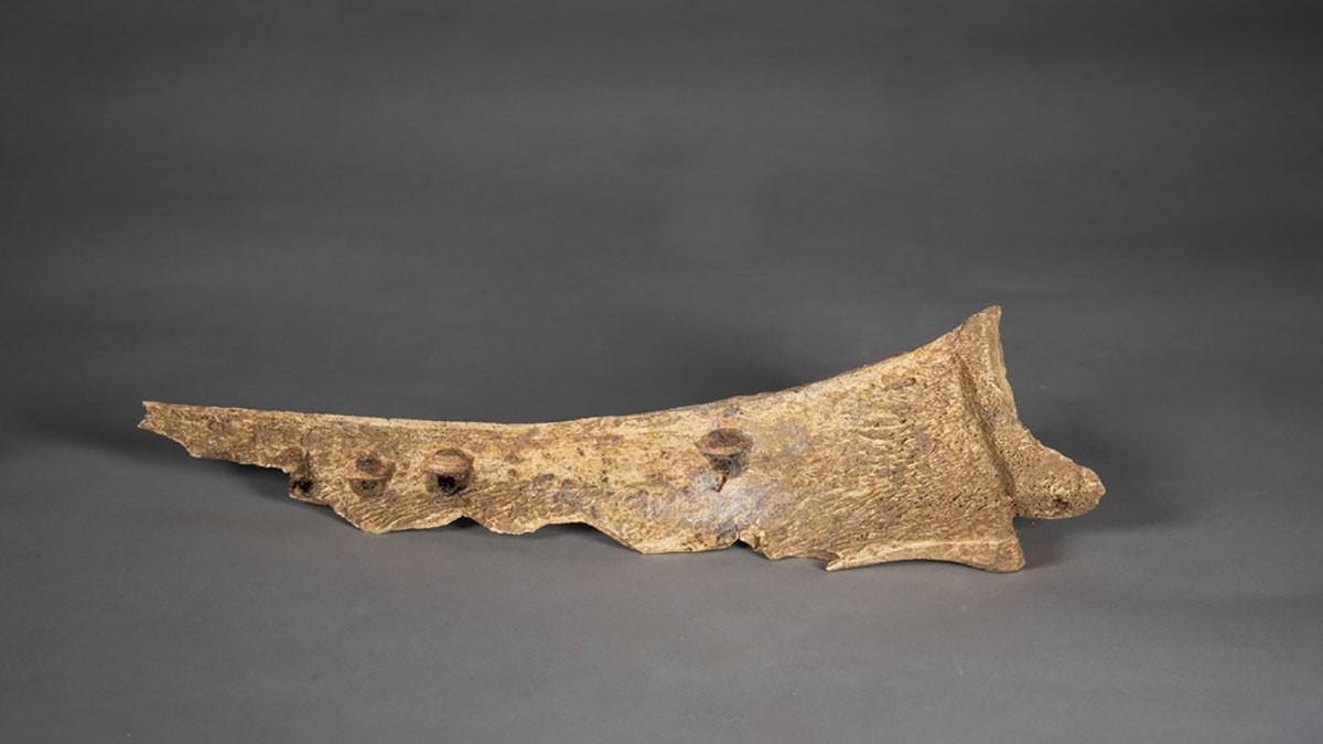 На коленях обезглавленный скелет свидетельствует о древнем жертвенном обряде