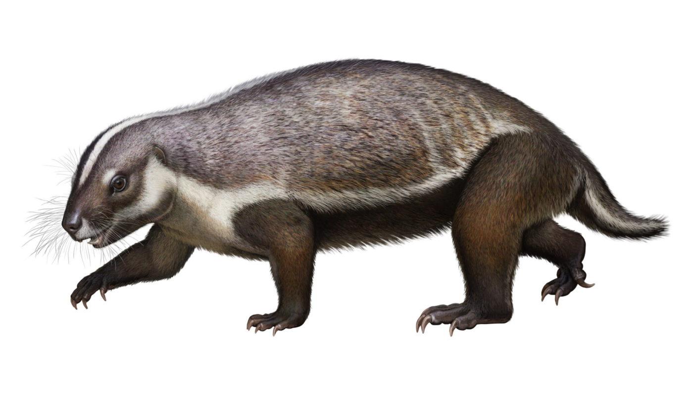 На Мадагаскаре обнаружено странное млекопитающего мелового периода