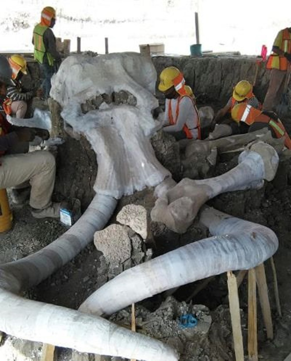 В Мексике обнаружено гигантское кладбище мамонтов