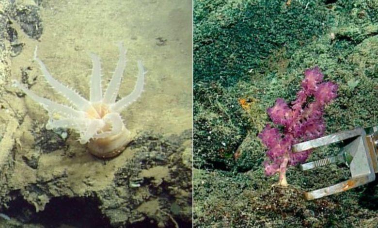 Десятки новых видов, обнаруженных вблизи Галапагосских островов