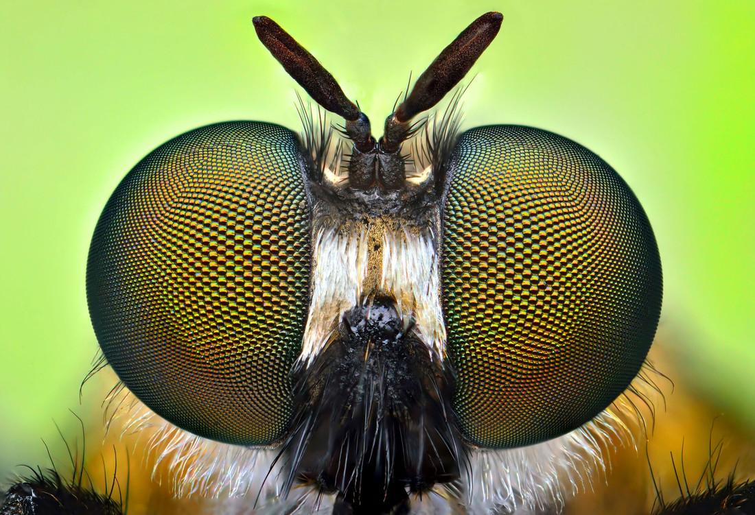 Мозг мух помогает нам понять оптические иллюзии