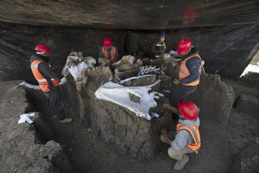 По меньшей мере 200 скелетов мамонтов, найденных в Мексике
