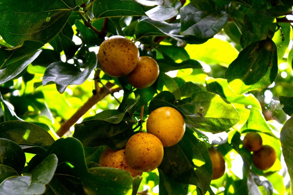 Какие самые смертоносные природные яды в мире?