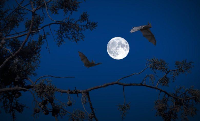 Летучие мыши могут «предсказывать» траекторию своей добычи
